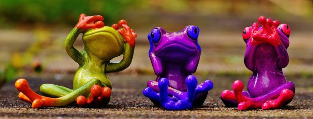 frogs-1420294_1920